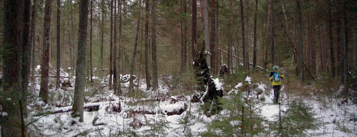 Lithuania. Following the wild